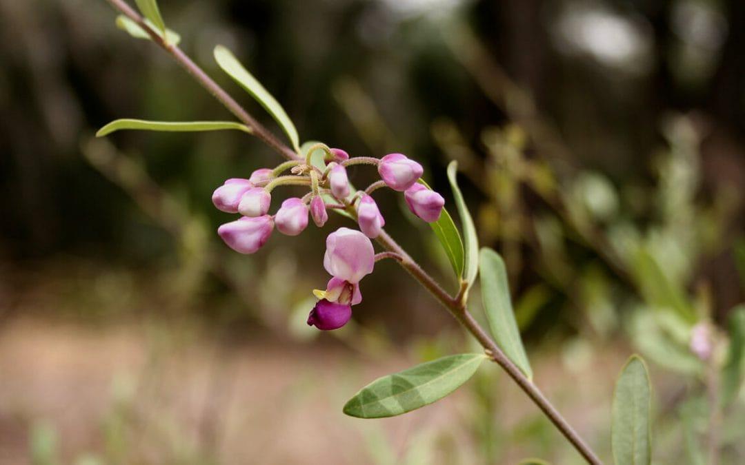 Développement de l'herboristerie et des plantes médicinales